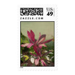 Pink Plant Postage Stamps