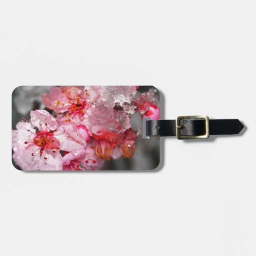 Pink Plum Blossoms & Snow Tags For Bags