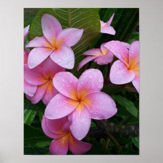Pink Plumeria Flower Poster