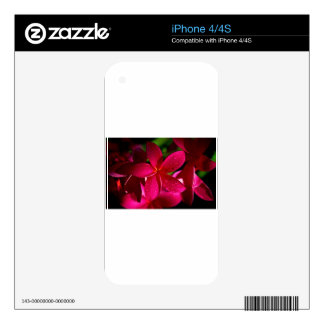 Pink Plumeria Flowers iPhone 4 Decals