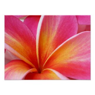 Pink Plumeria Frangipani Hawaii Flower Hawaiian Poster