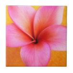 Pink Plumeria Frangipani Hawaii Flower Hawaiian Tile