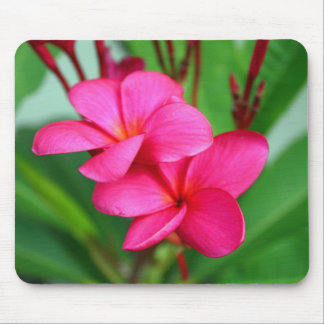 Pink Plumeria Frangipani Hawaiian Flower Mouse Pad
