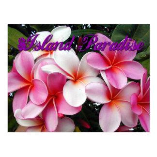 Pink Plumeria Hawaiian Postcard