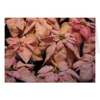 pink poinsetta's greeting card