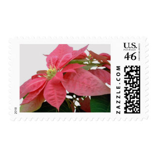 Pink Poinsettia 1 Stamps