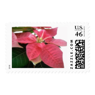 Pink Poinsettia 2 Postage Stamps