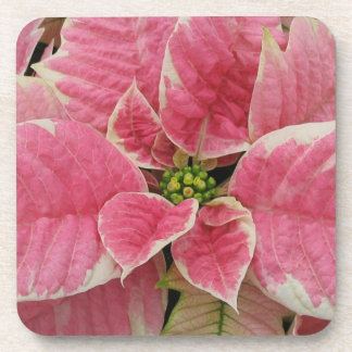Pink Poinsettia Drink Coasters Set