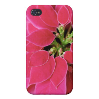 Pink Poinsettia Case For iPhone 4
