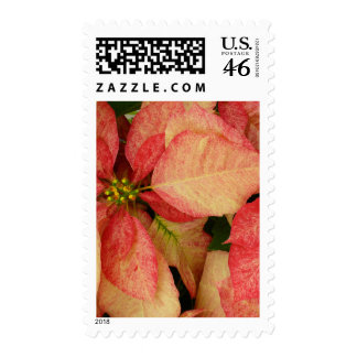 Pink Poinsettia Postage Stamps