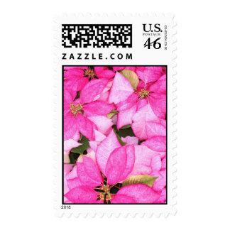 Pink Poinsettia Postage