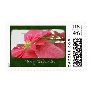Pink Poinsettias 1 - Merry Christmas Stamp