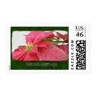 Pink Poinsettias 1 - Seasons Greetings Postage Stamp