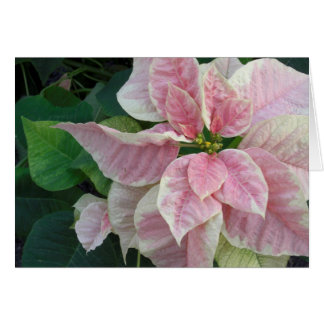Pink Pointsettia Card