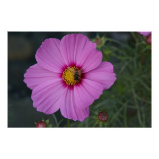 Pink Pollination Poster