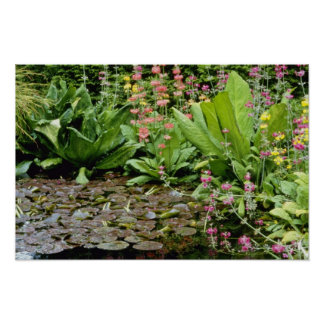 Pink Pond Plants Including Primula florindae flowe Poster