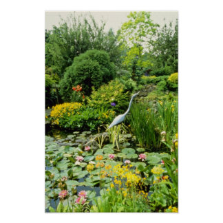 Pink Pond With Hosta, Primula florindae, Lilly, Mi Poster