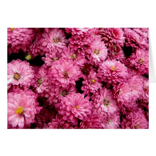 Pink Poofs Greeting Cards