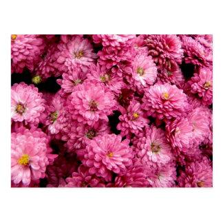 Pink Poofs Postcard