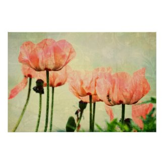 Pink Poppies and Floral Swirls Posters