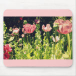 Pink poppies mouse pads