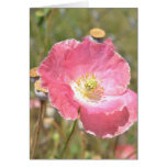 Pink Poppy and Fence Card
