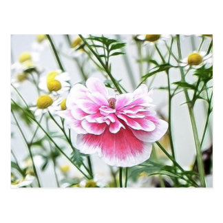 Pink Poppy And Feverfew Postcard