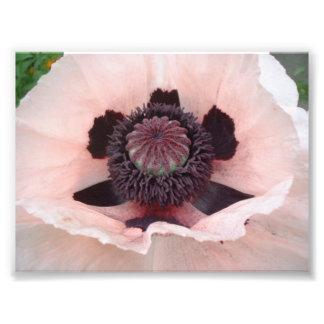 Pink poppy digital print photo