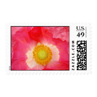 Pink Poppy Flower postage stamps Invitations Cards