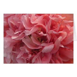 Pink Poppy Petals Valentine