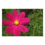 Pink Posey Photo Print