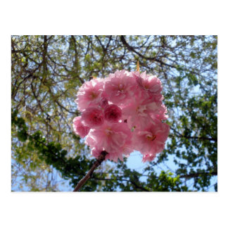 Pink powderpuff postcard