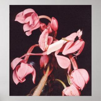 Pink Praying Mantis Camouflage Poster