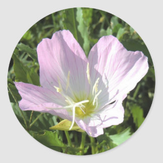 Pink Primrose - Sticker