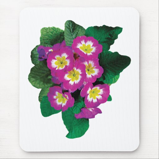 Pink Primroses Seen From Above Mouse Pads