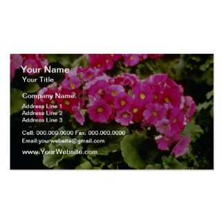 Pink Primula Obconica 'Juno Red' (German Primrose) Double-Sided Standard Business Cards (Pack Of 100)