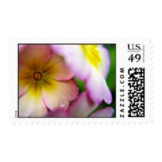 Pink Primulas Stamp