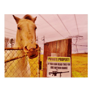 Pink Private Property Horse Postcard
