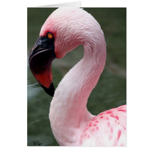 Pink Profile Card