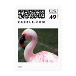Pink Profile Postage