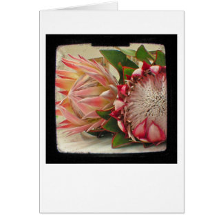 Pink Protea Flowers TTV Photo Card
