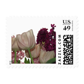 Pink,Purple and Pink Hyacinth Flowers Postage
