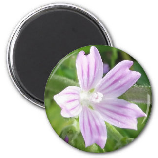 Pink-purple and white striped wildflower on magnet