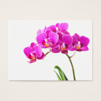 Pink Purple Dendrobium Orchid Tropical Flower Business Card