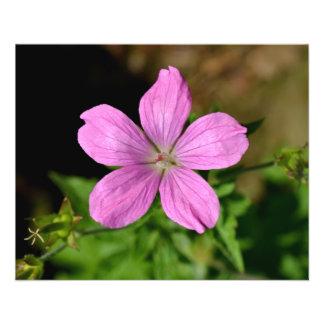 Pink - Purple Flower. Flyer