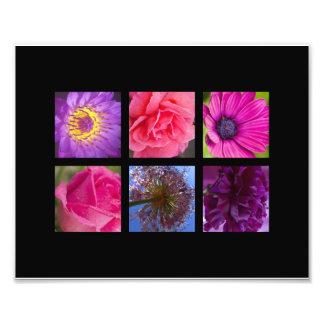 Pink & Purple Flowers Photo Print