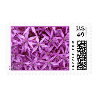 Pink Purple Flowers with 6 Thin Petals Postage Stamp