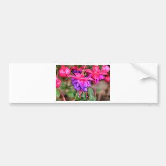 Pink purple Fuchsia flowers in bloom Bumper Sticker