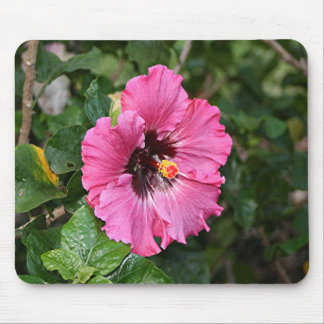 Pink purple hibiscus flower mouse pad
