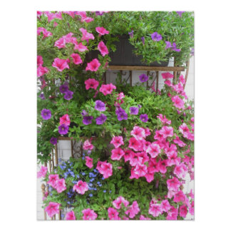 Pink & Purple Holland Flowers Photo Poster Art